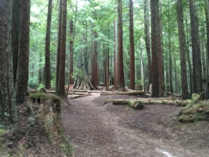 Arcata Community Forest Trails